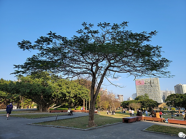 S21 Ultra大樹