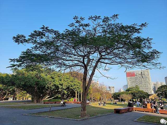 S21+大樹