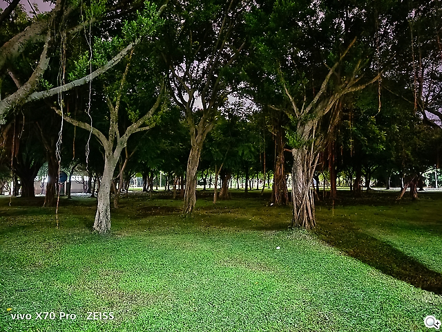 vivo X70 Pro拍攝夜晚樹林